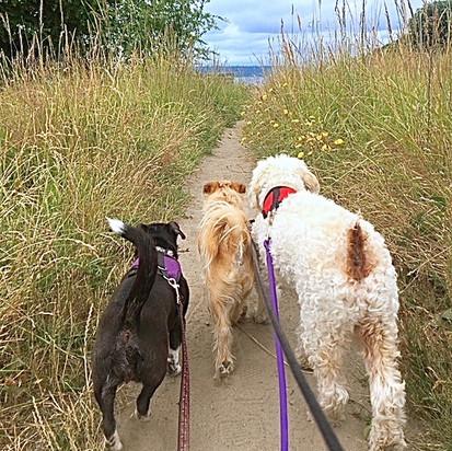 A trail-waggin' trio