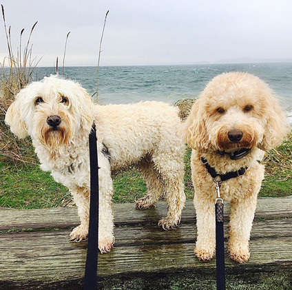 The blonde curlies know how to roll with mother nature down at the Discovery Park waterfront