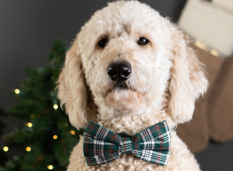 A Photographer's Secret Weapon: Christmas Bargains and a Cheese-Loving Dog