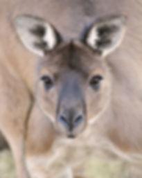 www.capeviewcottage.com.au