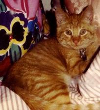 SCH BABY PHOTO 300 DPI.jpg