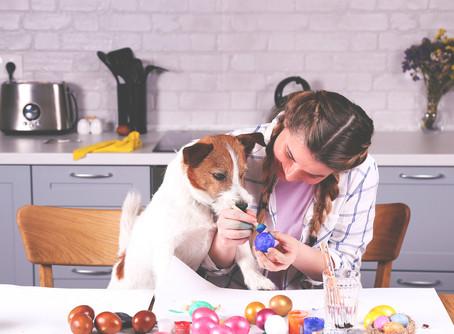 Velikonočne dobrote v pasji skledi