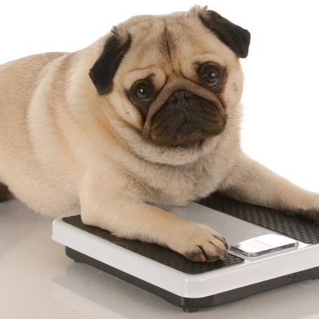 Debelost pri psih