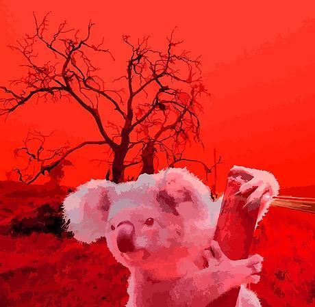 Koalafire2.jpg