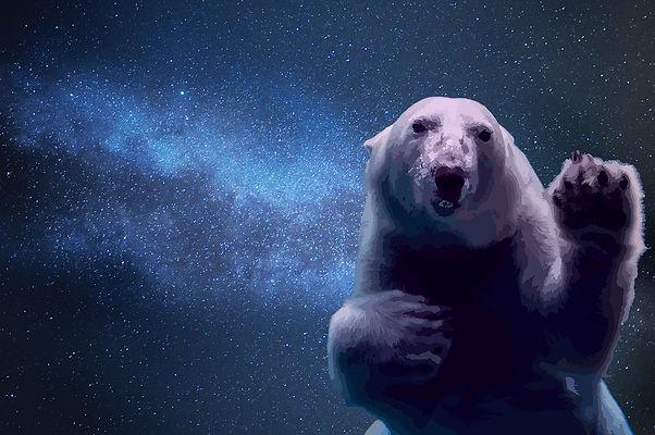 Spacebear.jpg