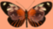 Butterfly eyes.png
