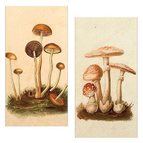 Matches -Vintage Mushrooms