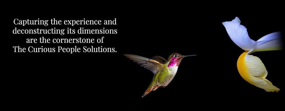 HOME Hummingbird Banner.png