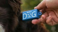 ¿Que es el clicker? Adiestramiento Canino En Positivo