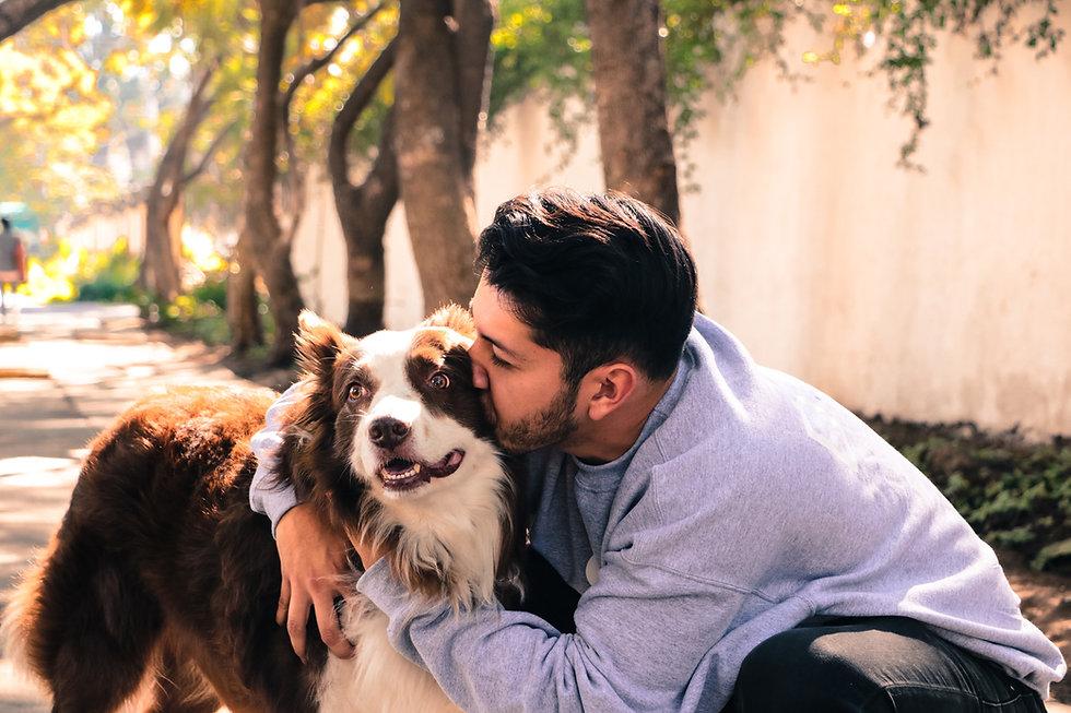 adiestramiento-canino-modest-dog-mexico-