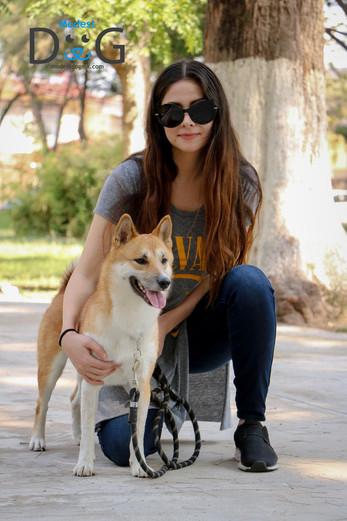 perros-mascotas-adiestramiento-canino-gu
