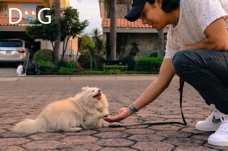 coach-canino-gdl-entrenador-de-perros-gd