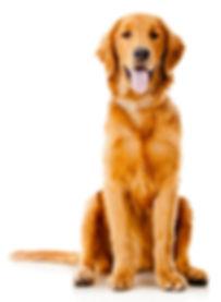 hospedaje-perros-mascotas-guadalajara-mo