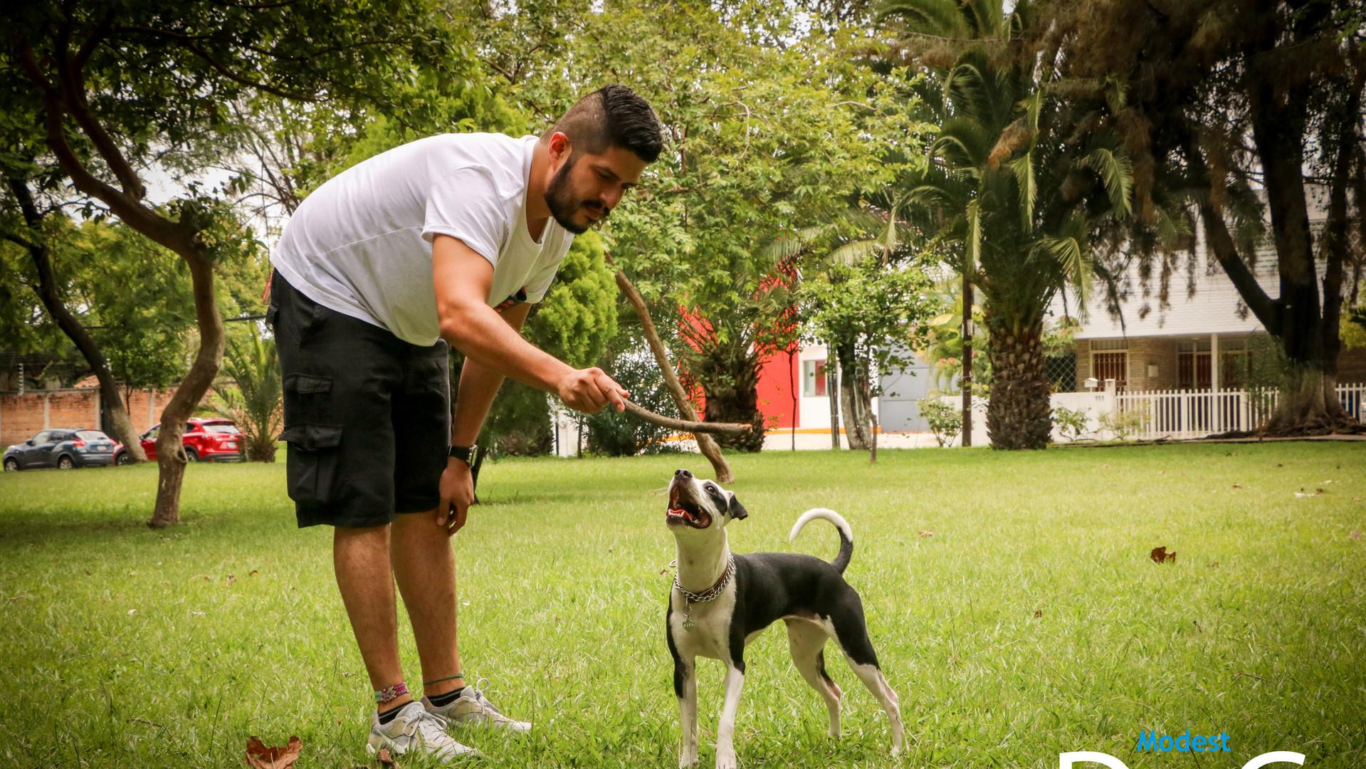 perros-adiestramiento-canino-modest-dog-
