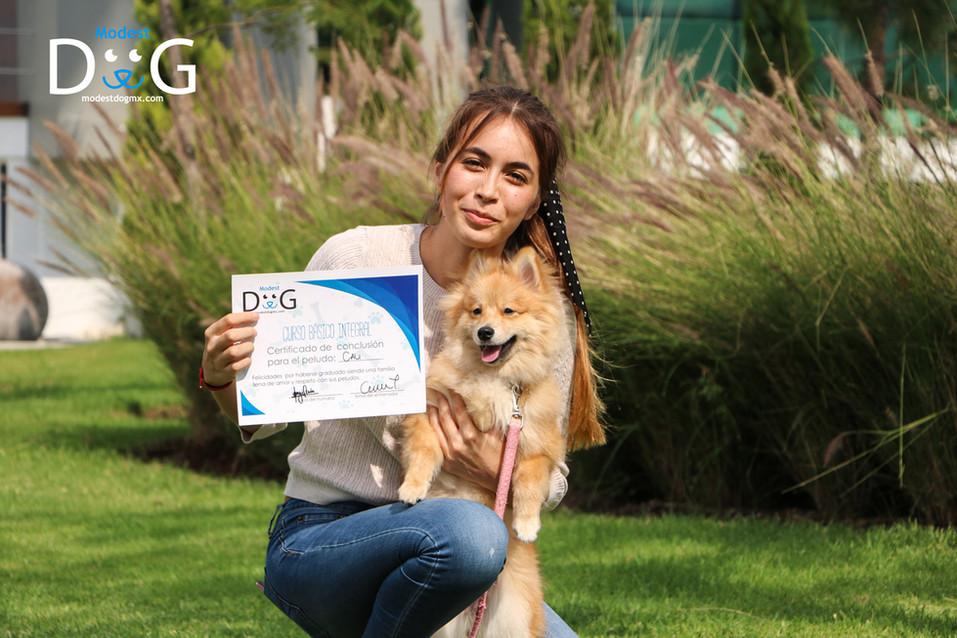 perros-mascotas-gdl-adiestramiento-canin