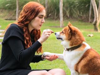 ¿Qué es el Adiestramiento Canino Positivo?