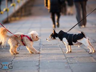Como presentar un perro a otro : cuando tu perro conoce a otro en su paseo