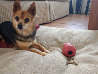 Enrichment for Fearful Dogs