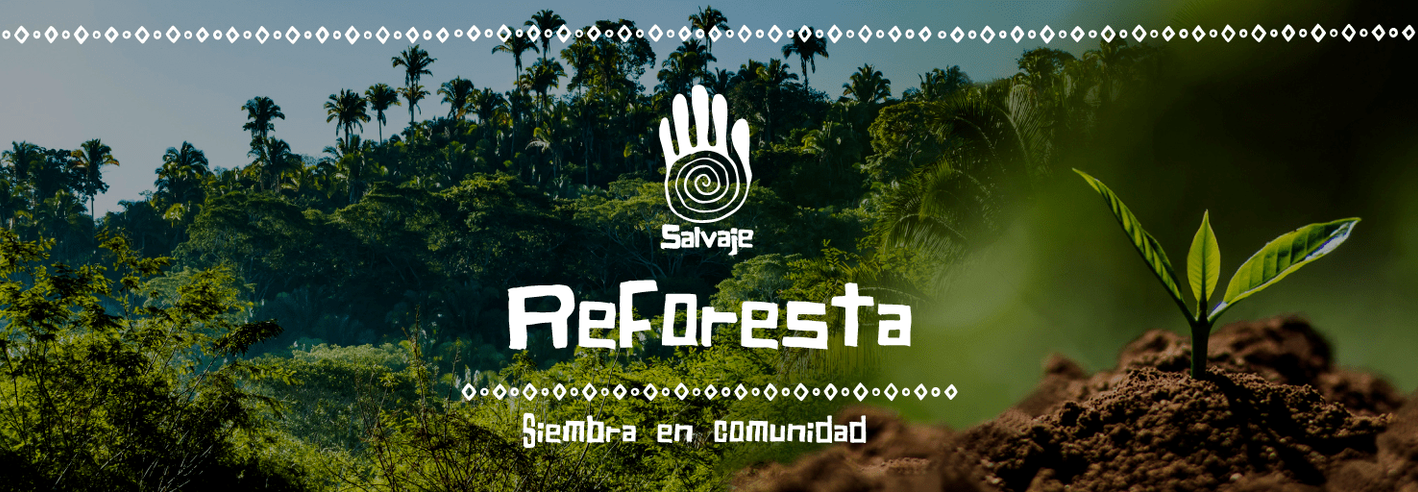 Fondo-de-web-reforesta-min.png