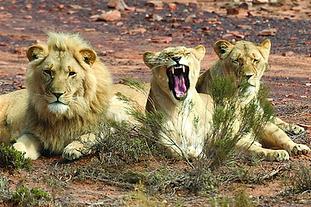 aquila-private-game-reserve-wildlife-lio