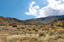 Los Padres mountains, California