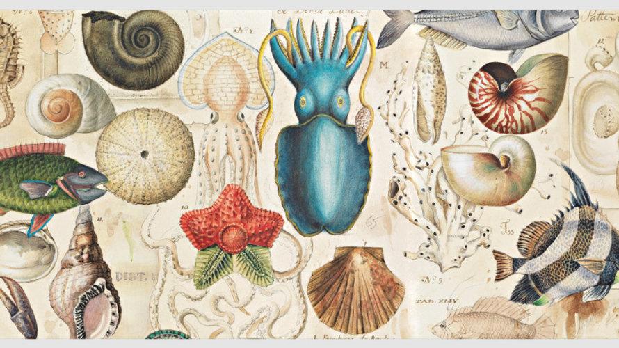 Ocean Life Post Card