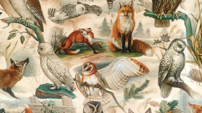 Wrapping Paper Fox & Owl