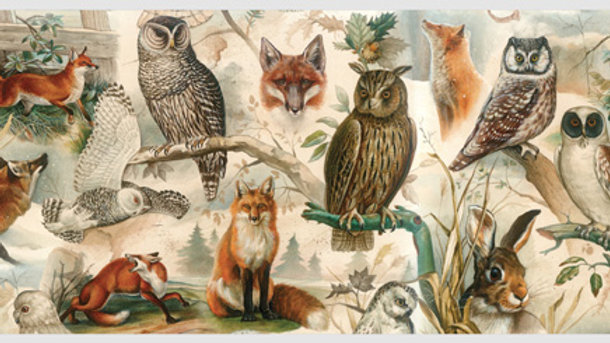 Fox and Owl Post Card