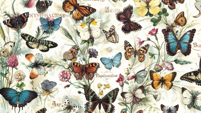 Wrapping Paper Butterflies