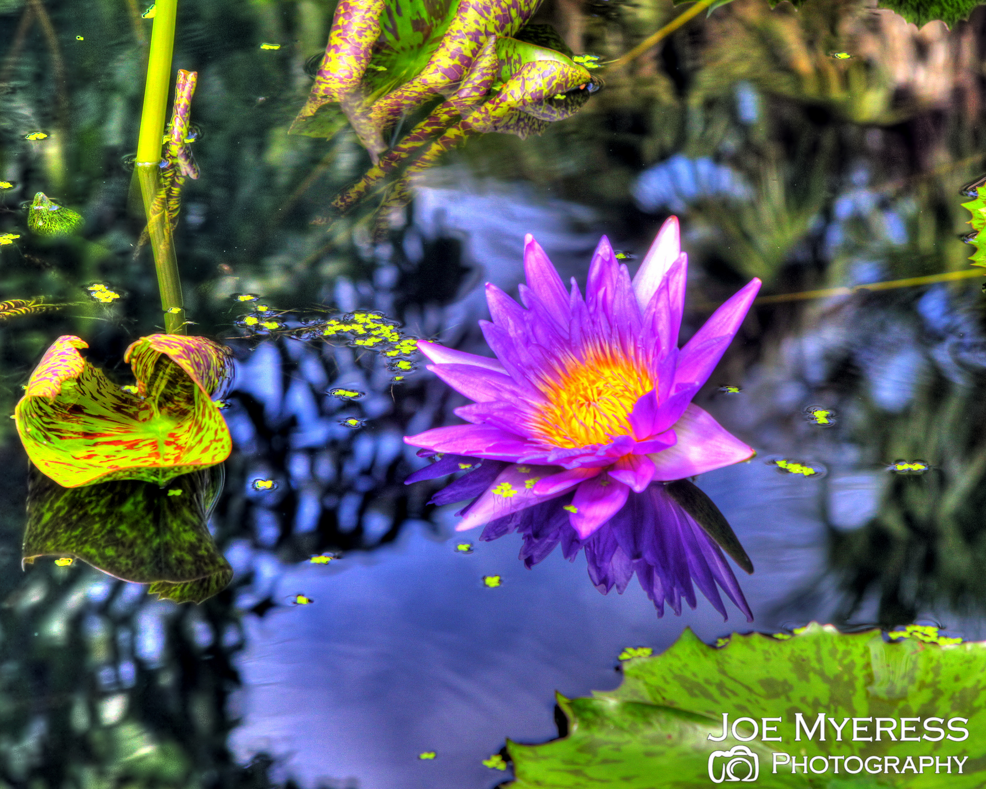 HDR purple flower