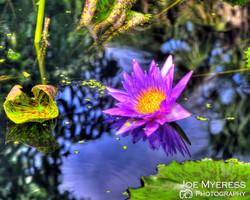 HDR purple flower