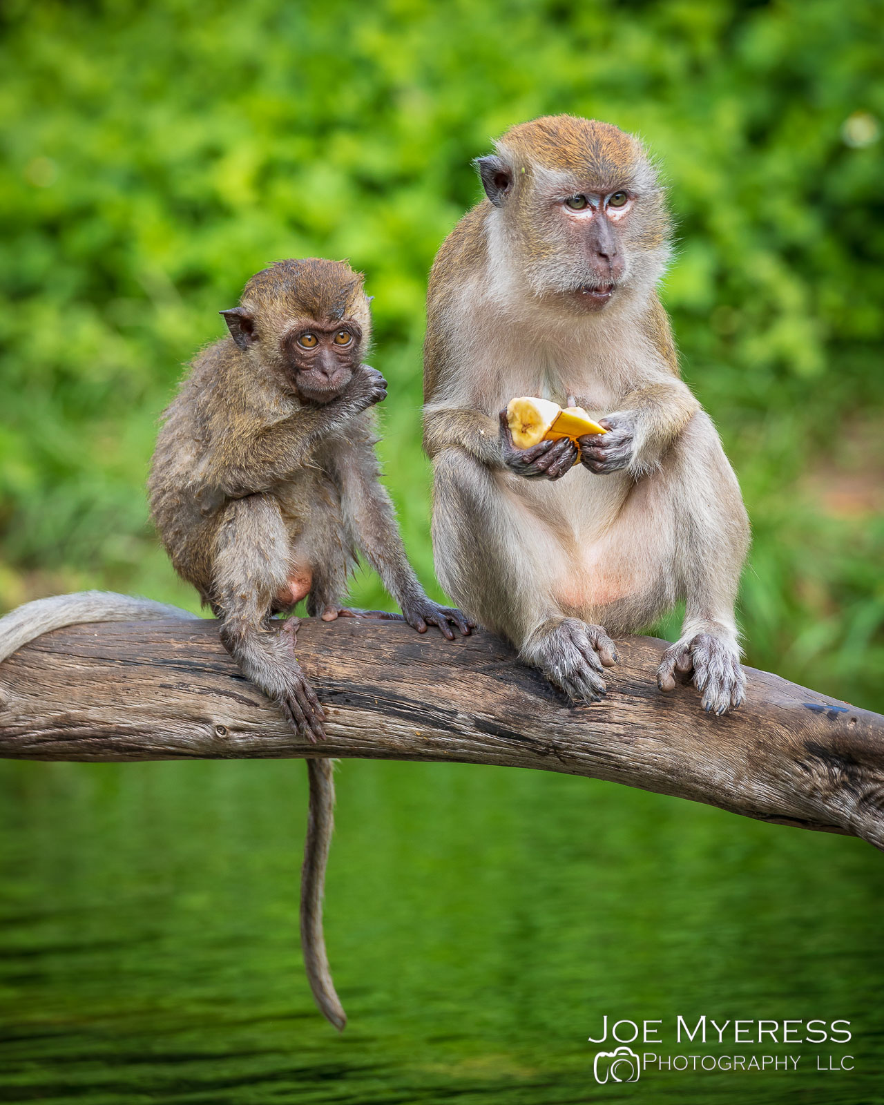 Monkeys having Lunch