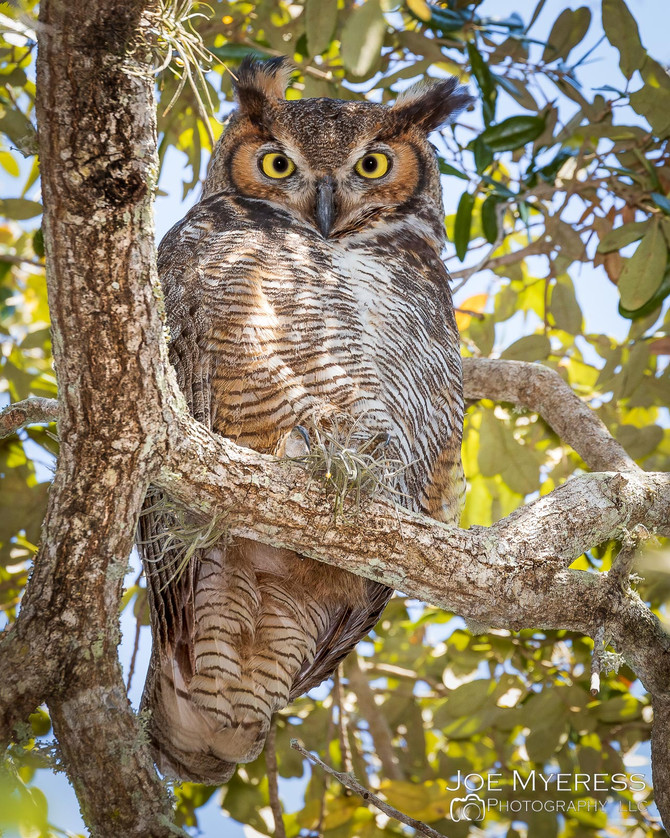 Who goes there?   And other things Owls say