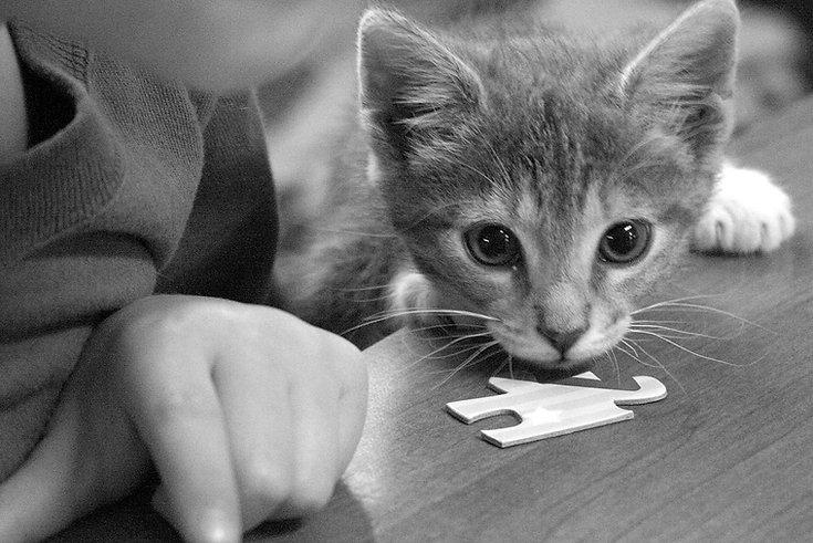 puzzled kitten 2.jpg
