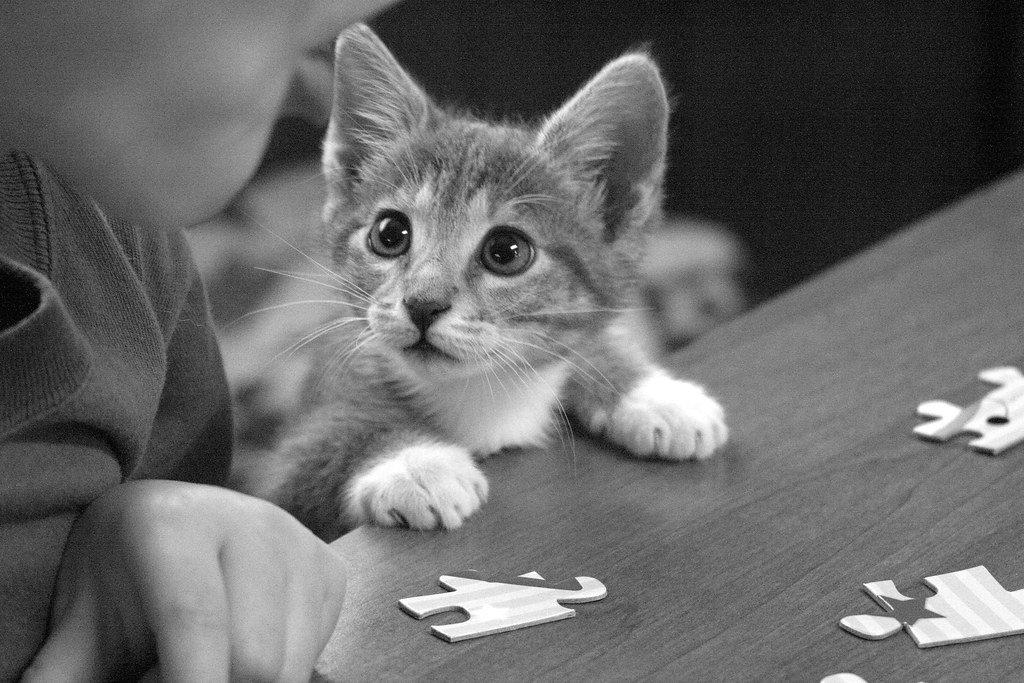 Puzzled kitten.jpg