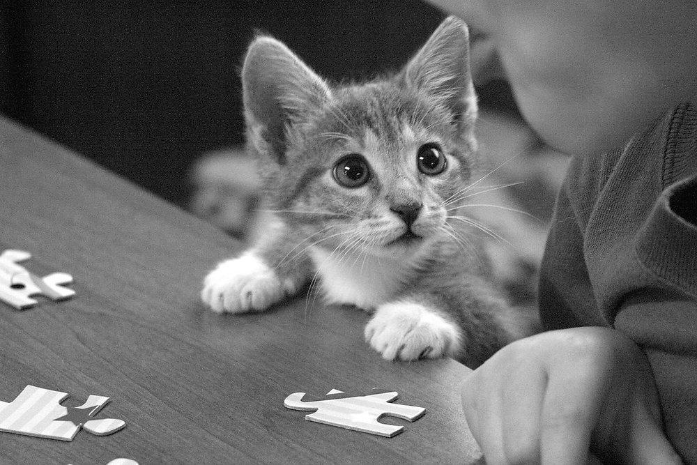 Puzzled kitten 1a.jpg