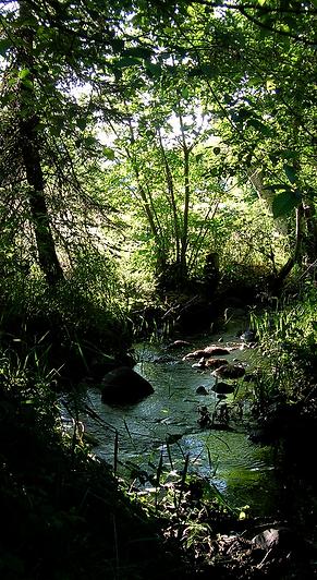 RJ Tree Service creekside trees