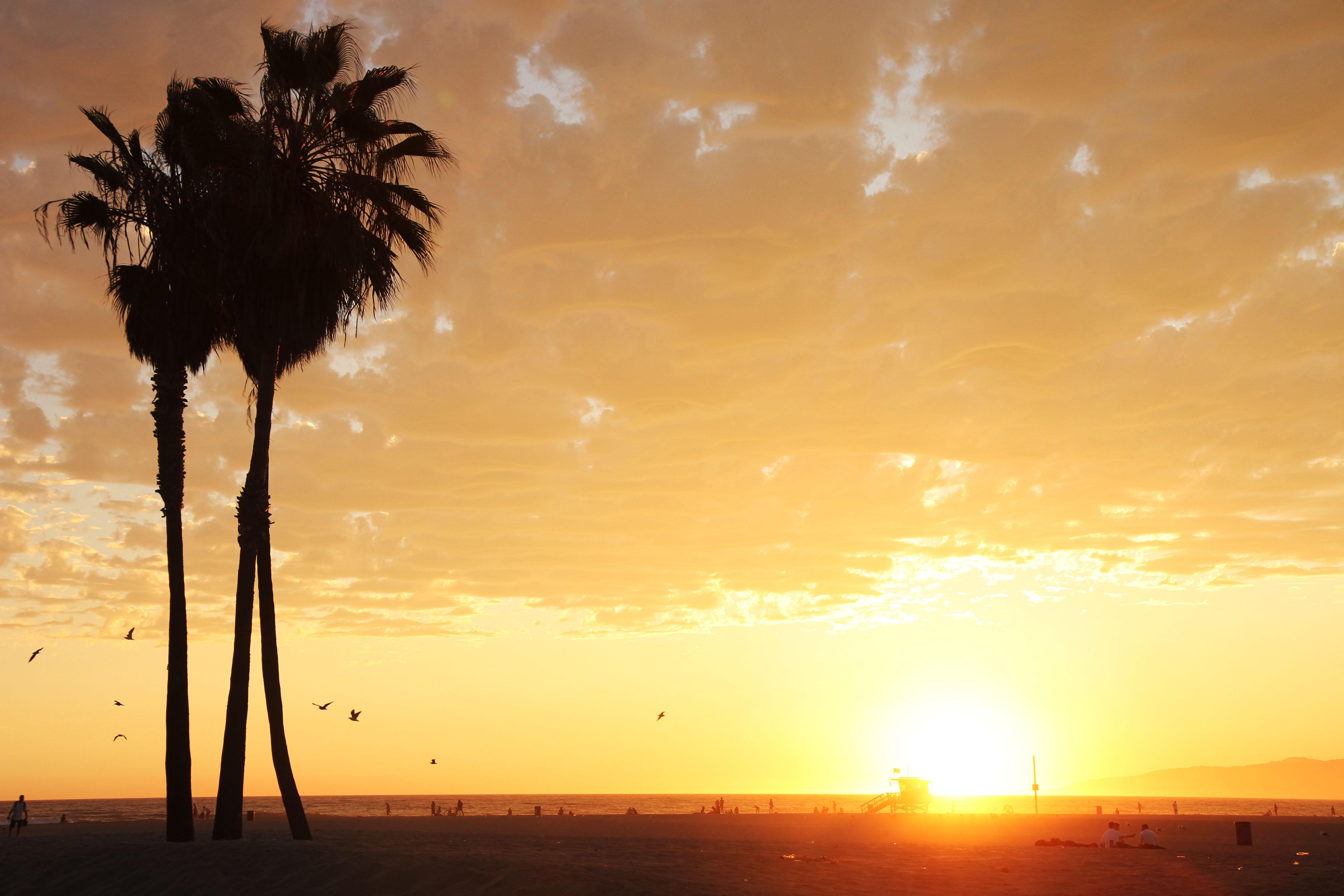 L.A Venice Beach