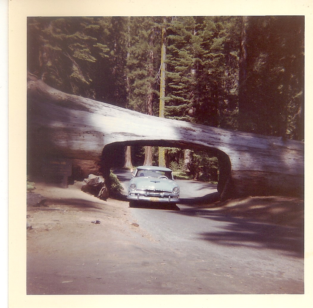 Our '56 Plymouth in Sequoia
