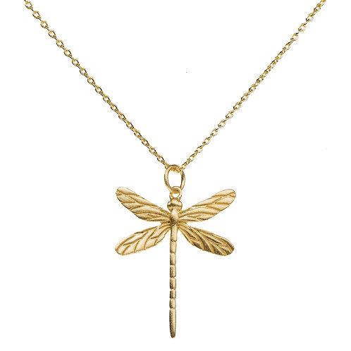 hi dragonfly