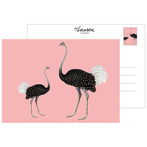 ostrich party postcard