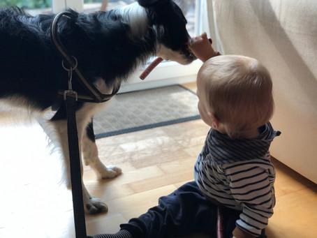 Wieso Hundesabber das Immunsystem unserer Kinder stärkt