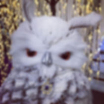 Owl you need are jewels _Les Automnales,