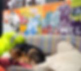 dog-asleep-on-sofa-in-communal-area-in-s