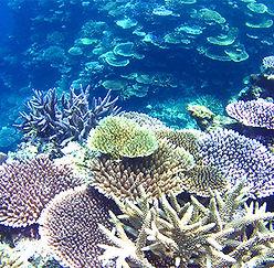 snorkeling011.jpg