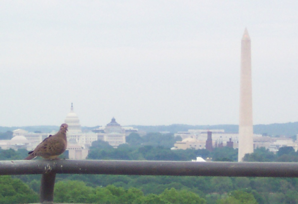 The Bird and Washington Monument