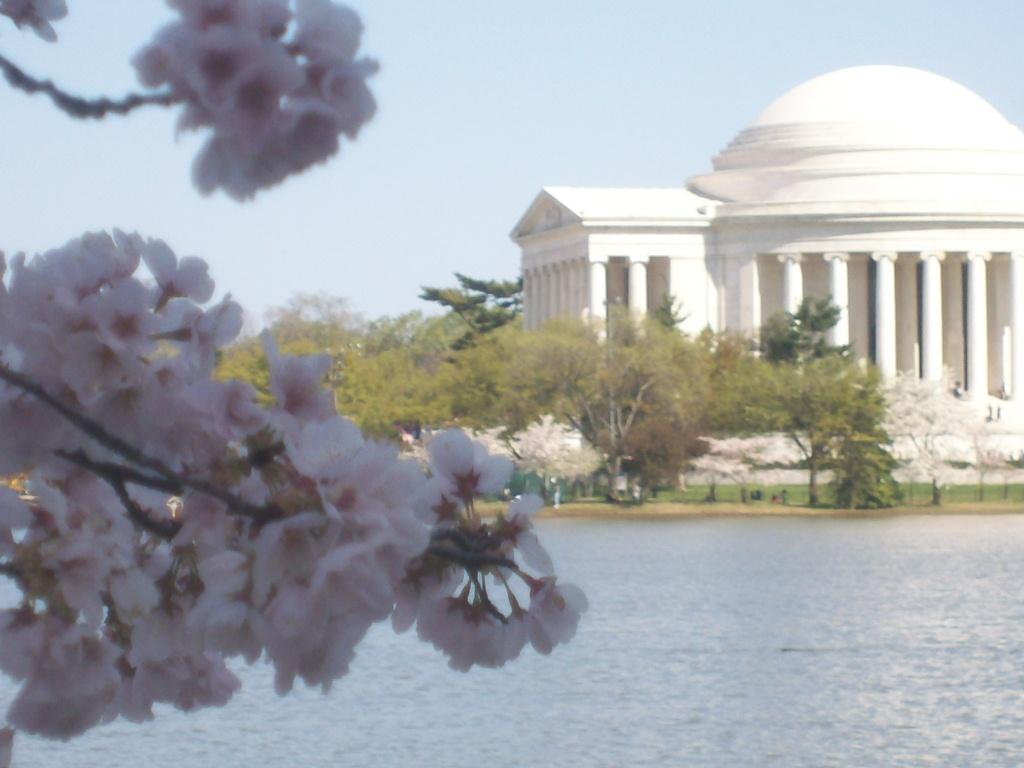 Thomas Jefferson during Cherry Blossom Season