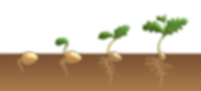 germination.png