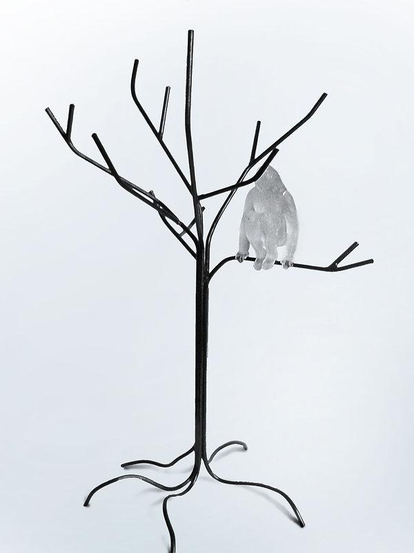kat-uit-de-boom2.jpg