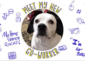 Introduce the World to Your New Co-Worker(s)!! #MyNewCoWorker